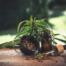 Medical Marijuana for Senior Citizens